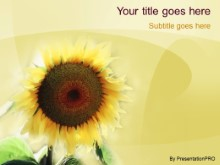 Download sunflower PowerPoint Template and other software plugins for Microsoft PowerPoint