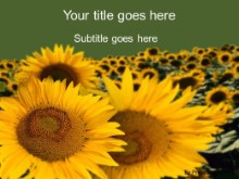 Download sunflowers PowerPoint Template and other software plugins for Microsoft PowerPoint