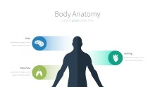 PowerPoint Infographic - 057 Body Anatomy