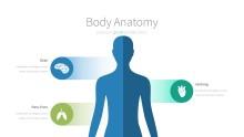 PowerPoint Infographic - 059 Body Anatomy