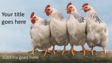 4 Chickens Widescreen PPT PowerPoint Template Background