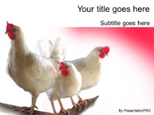 Download chickens PowerPoint Template and other software plugins for Microsoft PowerPoint