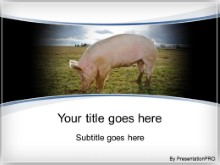 Download piggy PowerPoint Template and other software plugins for Microsoft PowerPoint