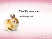 Download beautiful bunny PowerPoint Template and other software plugins for Microsoft PowerPoint