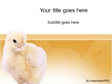 Download chicks PowerPoint Template and other software plugins for Microsoft PowerPoint