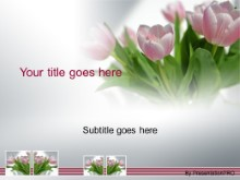 Download tulips in spring PowerPoint Template and other software plugins for Microsoft PowerPoint