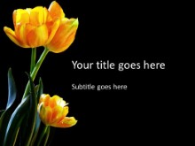 Tulips Trio PPT PowerPoint Template Background