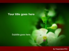 Download white orchids PowerPoint Template and other software plugins for Microsoft PowerPoint