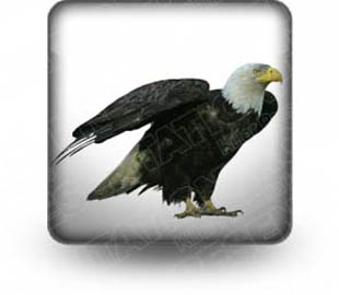 Download bald eagle b PowerPoint Icon and other software plugins for Microsoft PowerPoint