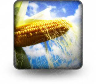 Download corn b PowerPoint Icon and other software plugins for Microsoft PowerPoint