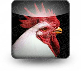 Download sth rooster b PowerPoint Icon and other software plugins for Microsoft PowerPoint
