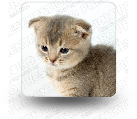 Kitten 01 Square PPT PowerPoint Image Picture